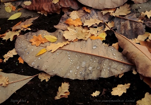 autumn leafs.2